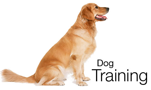 Dog-Training-1.jpg