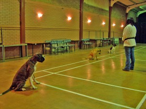 Dog Training 3