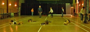 Dog Training 9